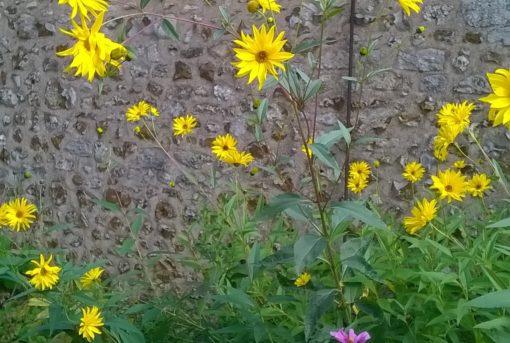 Chartres-Le jardin de Claude